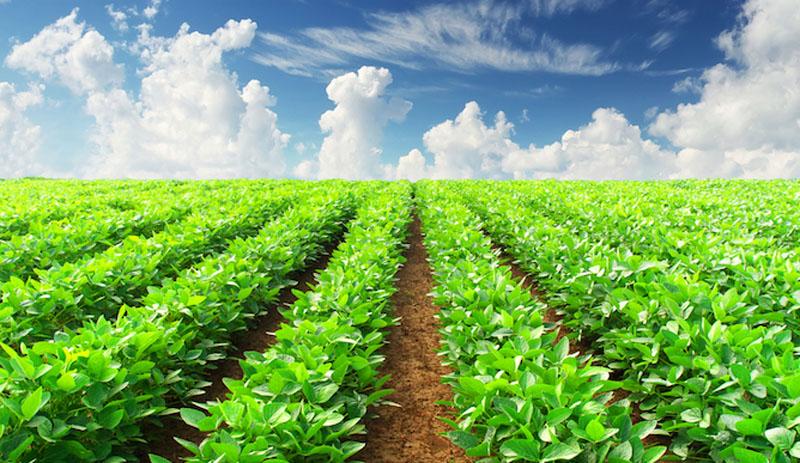 विदेशबाट फर्किएर तरकारी खेतीमा रमाउँदै पाल्पाका युवा