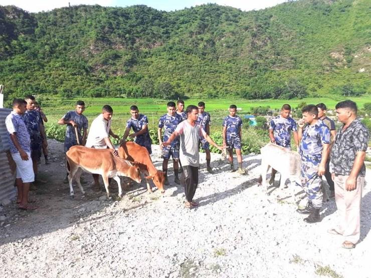 मार्ने उदेश्यले सेतीमा फालेका गाईको उद्धार