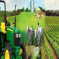 सिङ्गो गाउँ व्यावसायिक कृषिमा