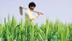 पशुपालक किसानलाई साढे छ करोड अनुदान