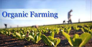 नेपालमै पहिलोपटक 'अर्गानिक कृषि' विषय पढाइने