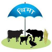 तनहुँका कृषकलाई पशु बीमा निःशुल्क