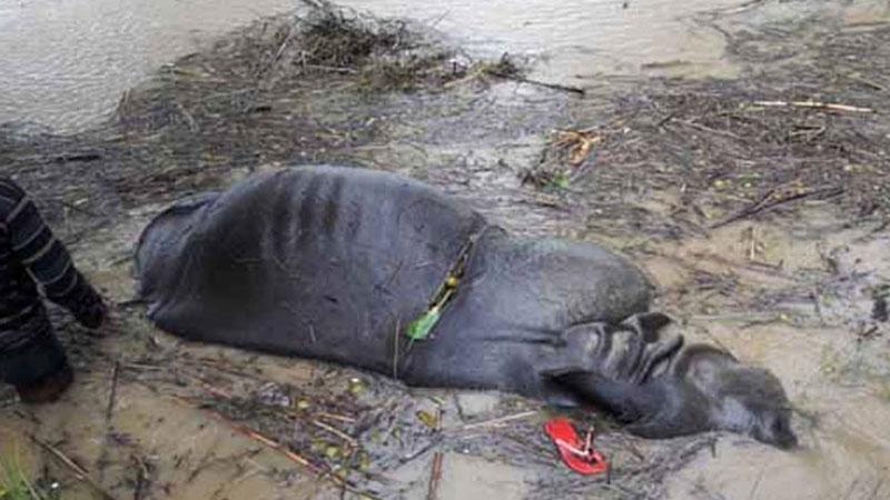 नारायणी नदीमा गैंडा मृत अवस्थामा फेला
