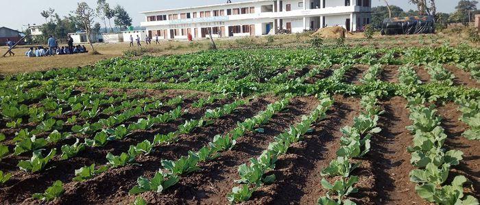 स्मार्ट कृषि कार्यक्रम बन्यो कृषकका लागि नमुना