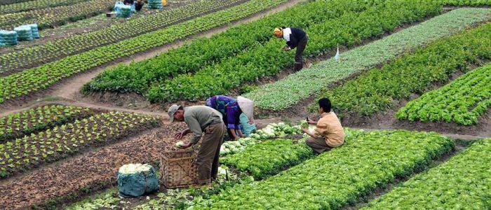 स्याङ्जाका दश गाउँ बन्दैछ 'नमूना कृषिगाउँ '