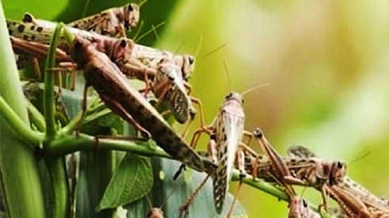 चितवन आइपुगेको सलहलाई,स्थानीयले गुलेली हानेर धपाए