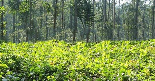 १२७ सामुदायिक वन वैज्ञानिक वनमा समाहित