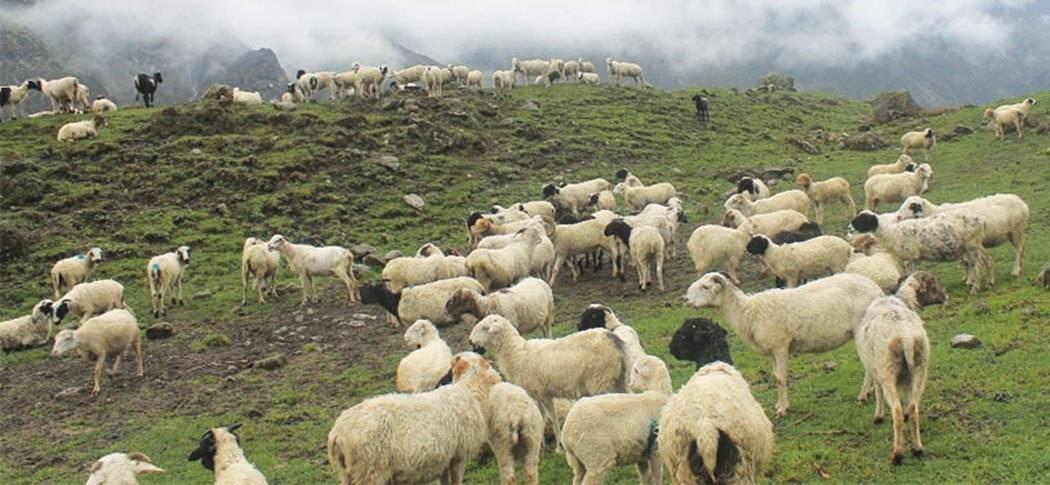 कृषि तथा सहकारी मन्त्रीद्वारा भेडा स्रोत केन्द्रको अनुगमन