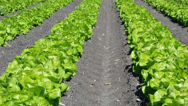 बेमौसमी तरकारी खेती सम्बन्धी निःशुल्क तालिममा सहभागी हुन अनुरोध