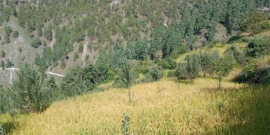 समुदायलाई आत्मनिर्भर बनाउन  ग्रामिण बस्तीमा स्याउ र कागती खेती
