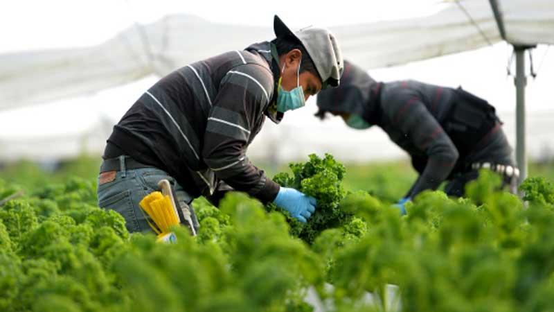 व्यवसायीक कृषि पेशामा दहपानीका २० महिला, ७०० सैनिकलाई पुर्याउँछन् तरकारी