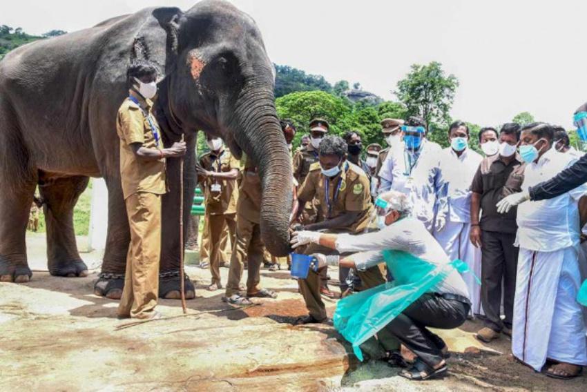 भारतमा २८ हात्तीको कोरोना परीक्षण