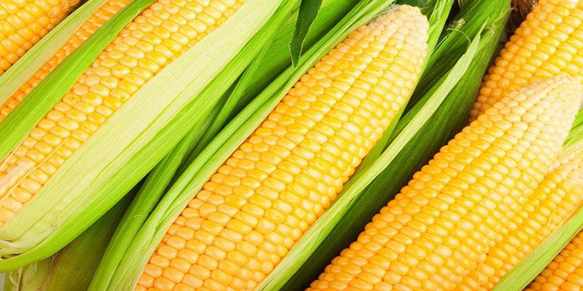 मकै उत्पादक कृषकका लागि अनुदानमा कृषि सामग्री प्रदान